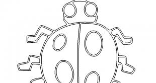 Käfer - Beetle