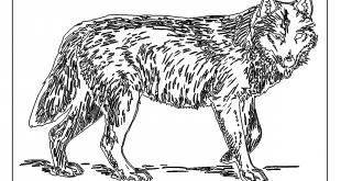 Aufwendiger Wolf