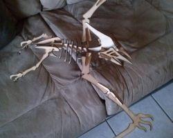 Flugsaurier (2)