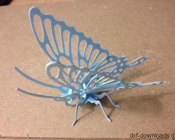 Schmetterling_0123