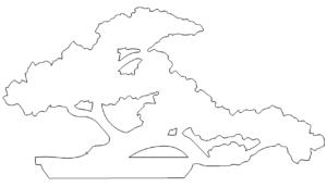 Bonsai Baum - Bonsai tree