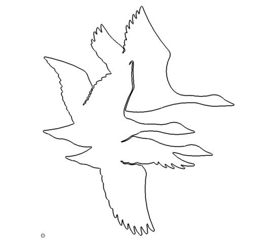Birds - Vögel