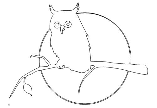 Eule - Owl