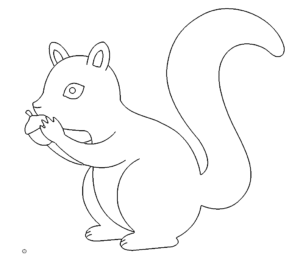 Eichhörnchen - Squirrel
