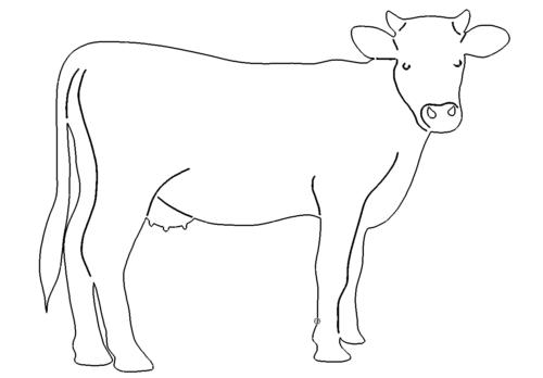Kuh Bild - Cow