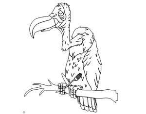 Geier - Vulture