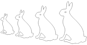 Hasen - Rabbits