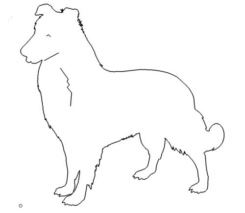Hund - Dog