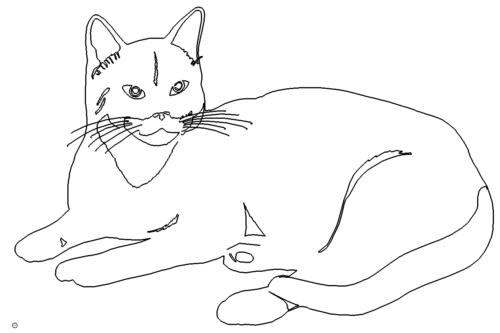 Katze liegt - cat lying