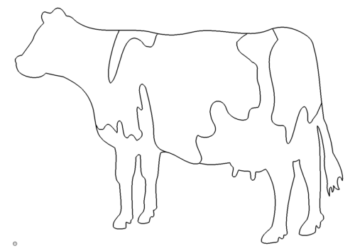 Kuh - Cow