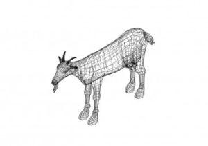 Männliche Ziege - male goat