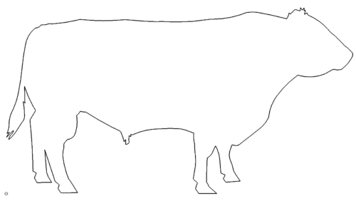 Ochse - ox