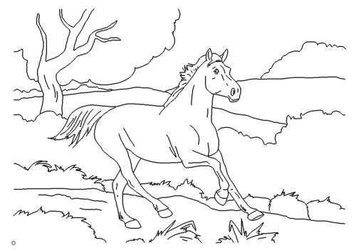 Pferd in Freiheit - Horse at liberty