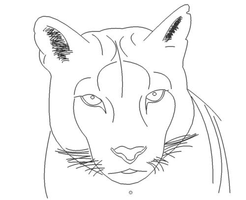 Puma Sinja