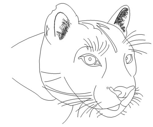 Pumakopf - Puma Head