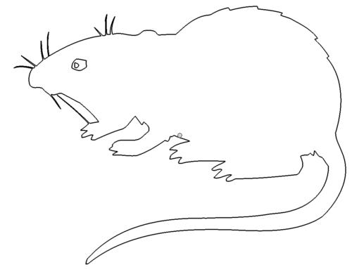 Ratte - Rat