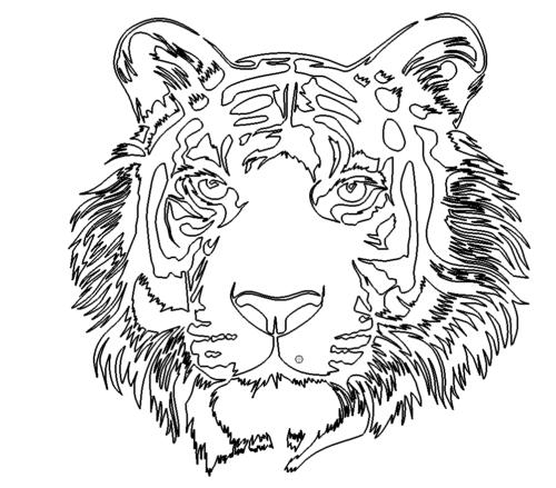 Tigerkopf - Tigerhead