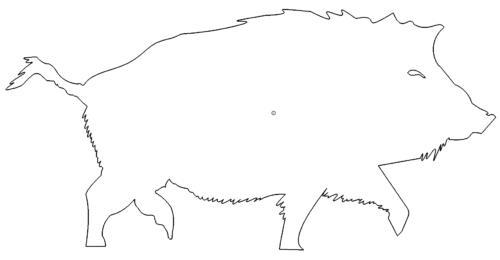 Wildschwein - Boar