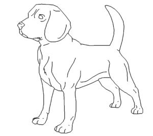 Böser Hund Beagle - Bad dog Beagle