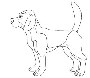 Jagdhund Beagle - Hound Beagle