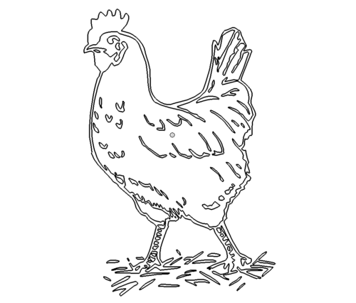 Stolzer Hahn - proud Rooster