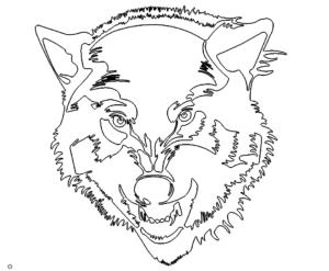 Gesicht vom Wolf - Face from Wolf