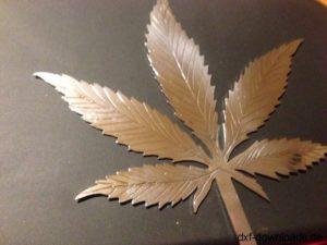 Hanf Cannabis