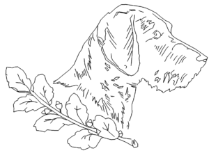Jagdhund - hound