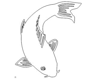 Fisch Karpfen