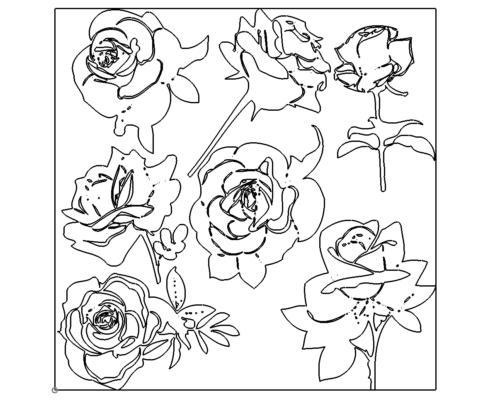 Rosensortiment - Rose assortment
