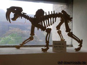Saber Dinosaurier 3D Modell - Saber 3D Dinosaur Model