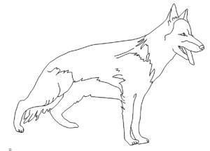 Schäferhund - Shepherd