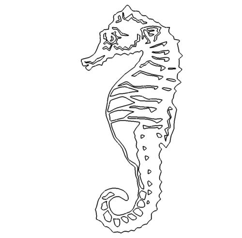 Seepferdchen - sea horse