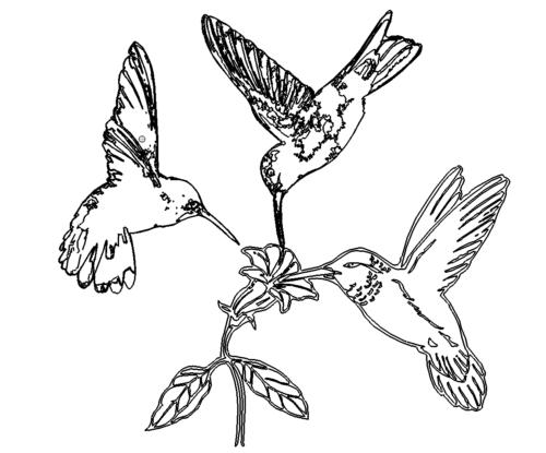 Vögel an Blumen - Birds on Flower